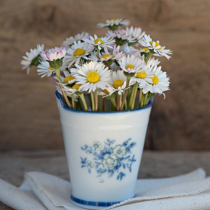 daisy-1346049_1280