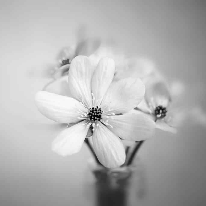 flower-1393840_1280