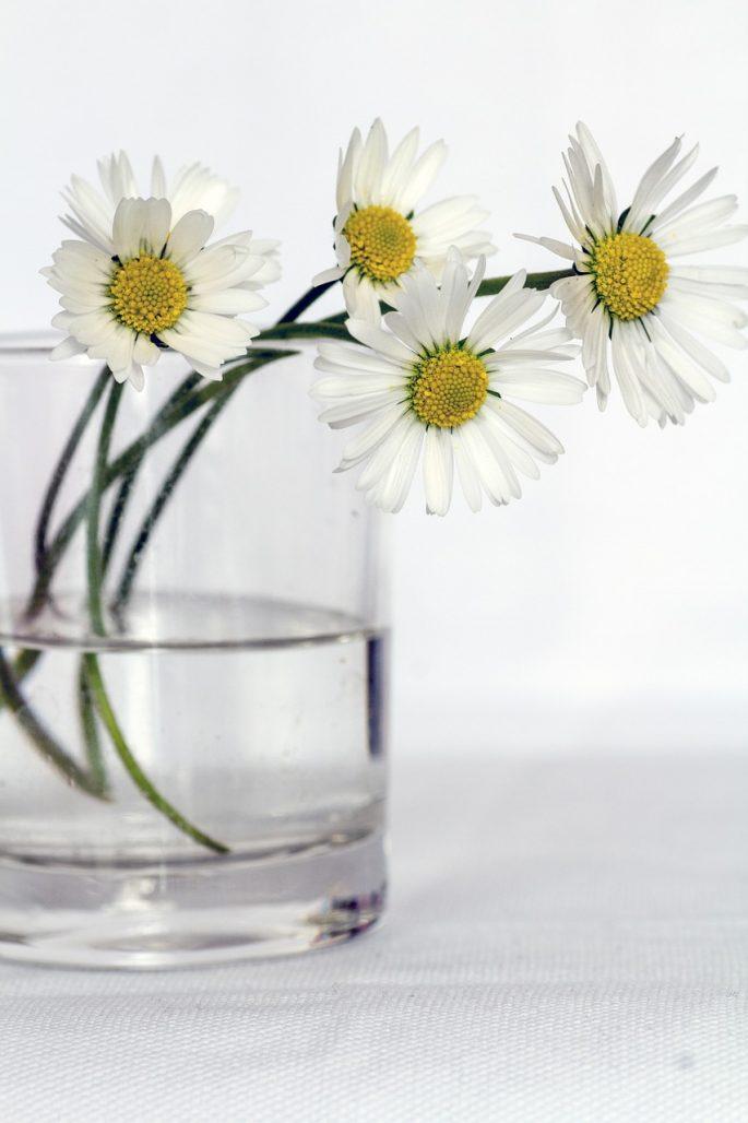 flowers-646637_1280